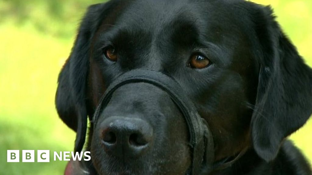 canadian guide dogs for the blind facebook