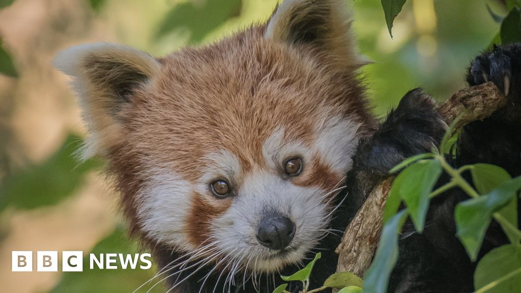 UK zoos at risk of closure