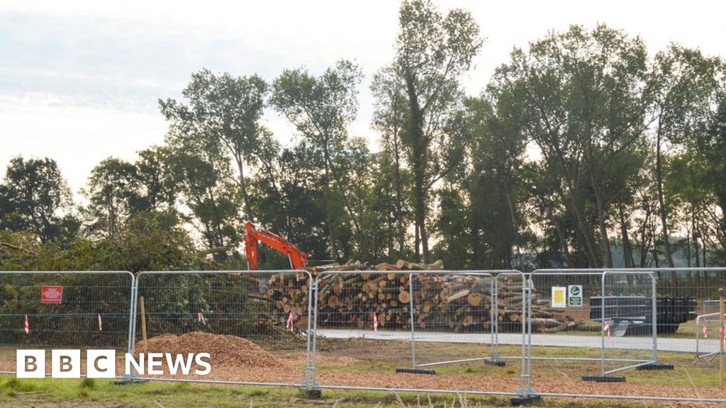 Backlash as HS2 fells ancient Staffordshire woodlands 'too early'