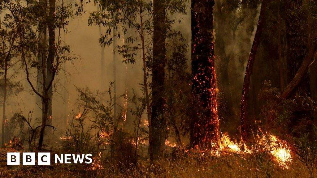 Australia fires: gum trees from the Bush fires worse?