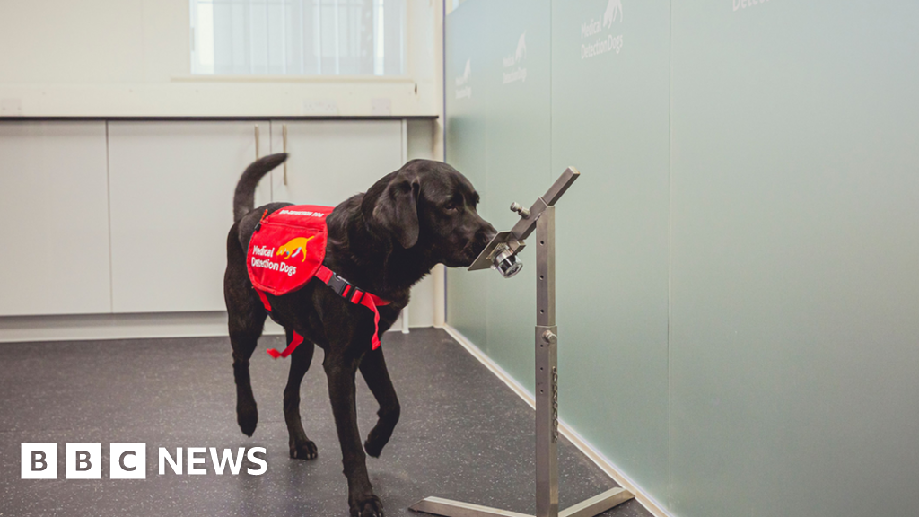Covid: Sniffer dogs could bolster screening at airports