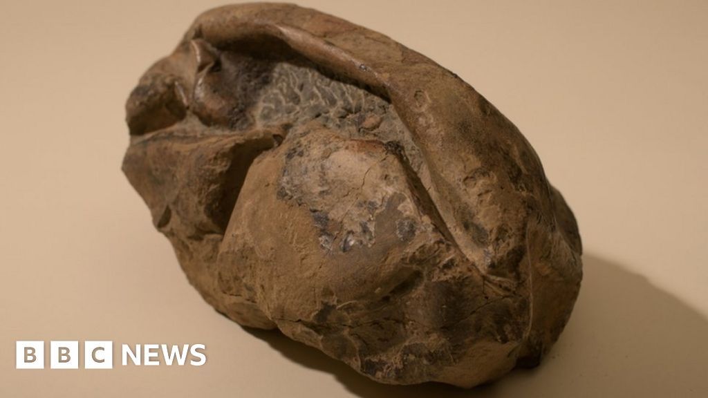 Mystery egg likely belonged to giant sea reptile, scientists say thumbnail