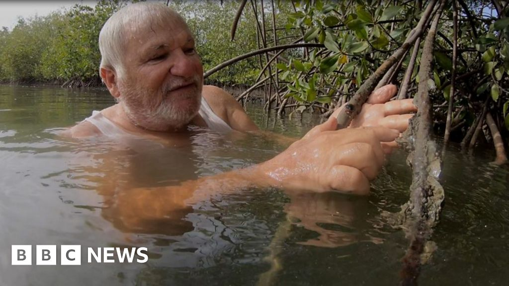 The man helping to save Senegal's mangroves