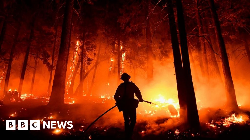 California fires: Blankets wrapped around world's biggest trees