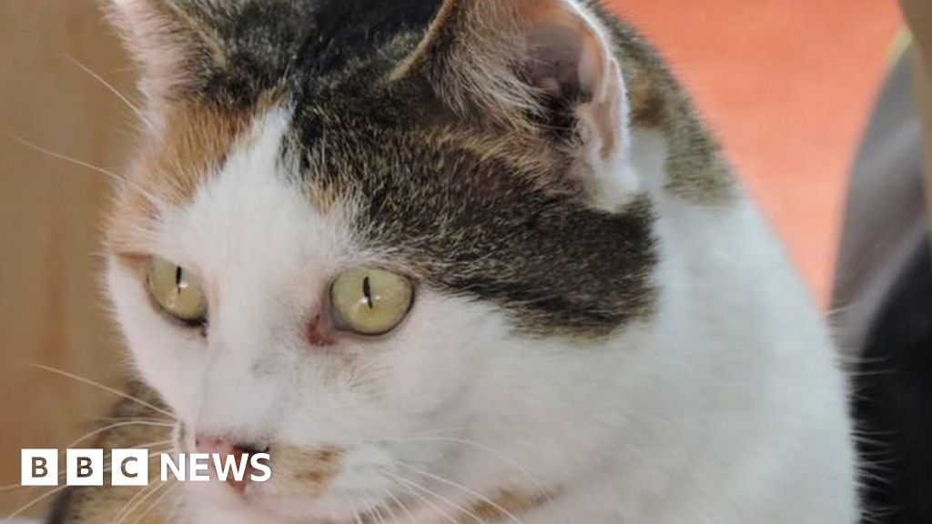 'Croydon cat killer' mystery solved