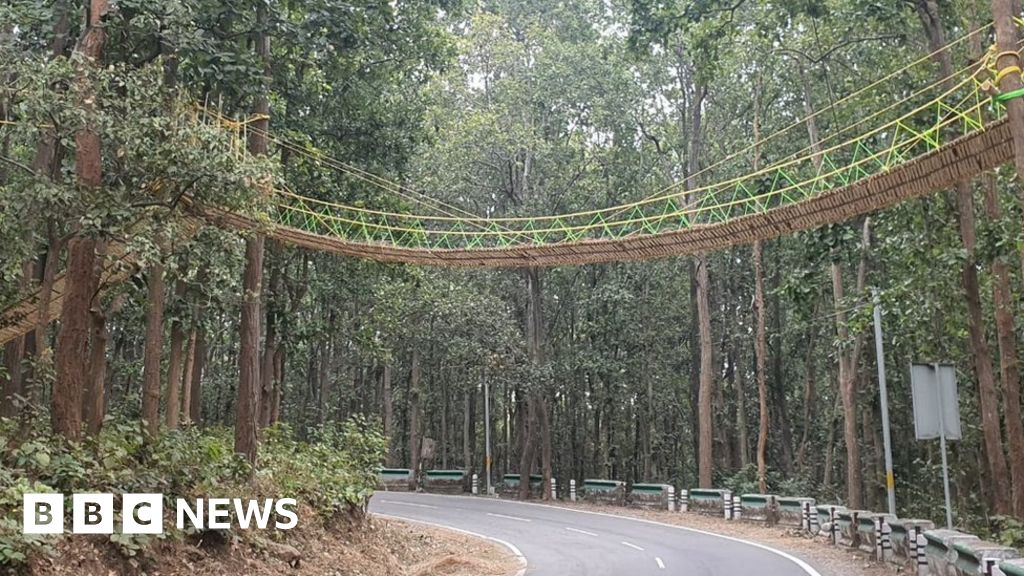 India builds bridge to help reptiles cross road