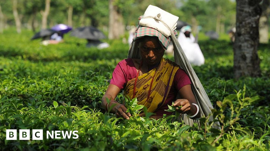 demand forecast for indian tea To forecast demand using a survey of potential consumers, the administrator should prepare an accurate and comprehensive description of the product and conditions of sale.