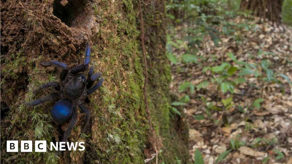 why guyana s rainforests are a scientist s dream bbc news
