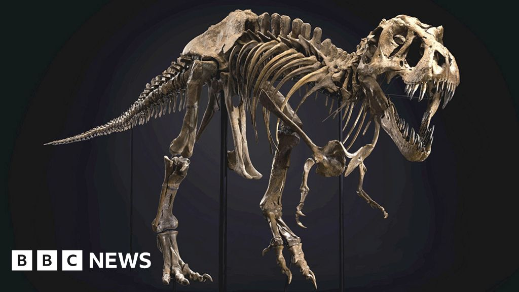 T. rex dinosaur 'Stan' sold for world record price