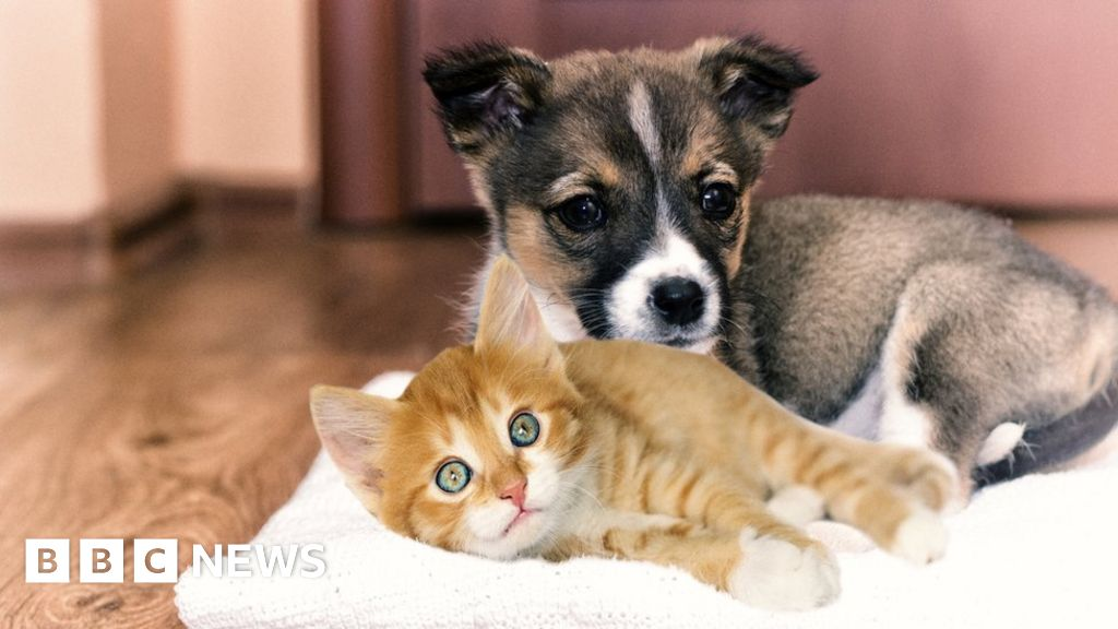 Coronavirus: Victims lose thousands to fake puppy and kitten sales - BBC  News