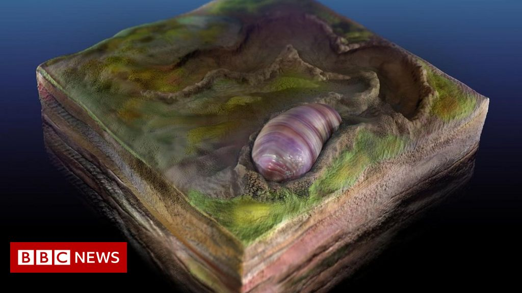 Fossil worm shows us our evolutionary beginnings – BBC News