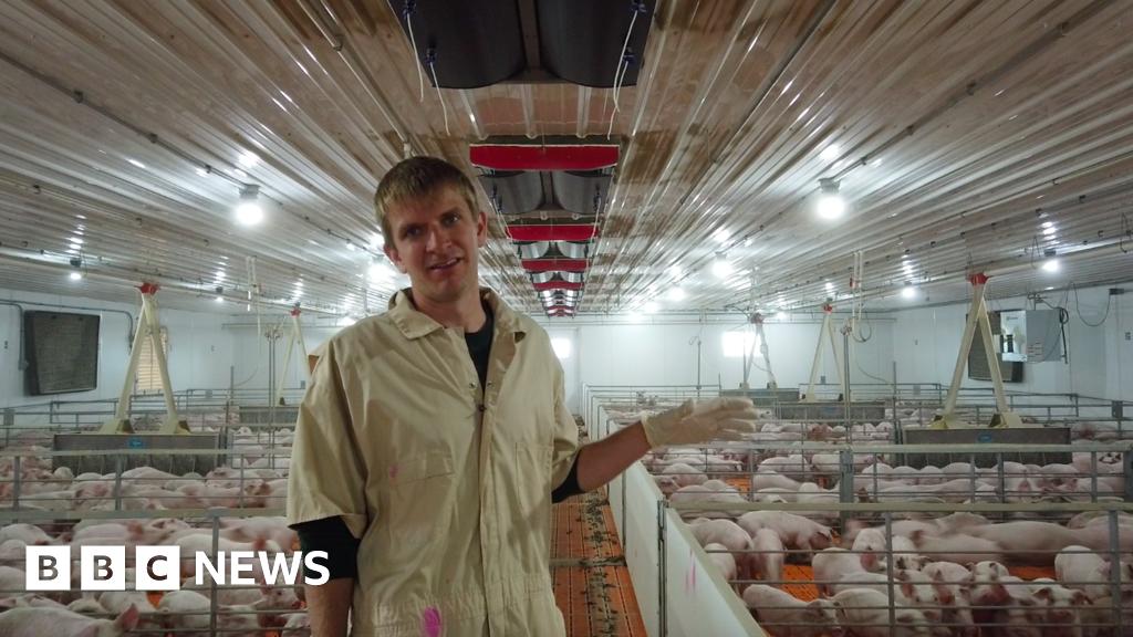 The 'mind-blowing' choice facing US pig famers thumbnail