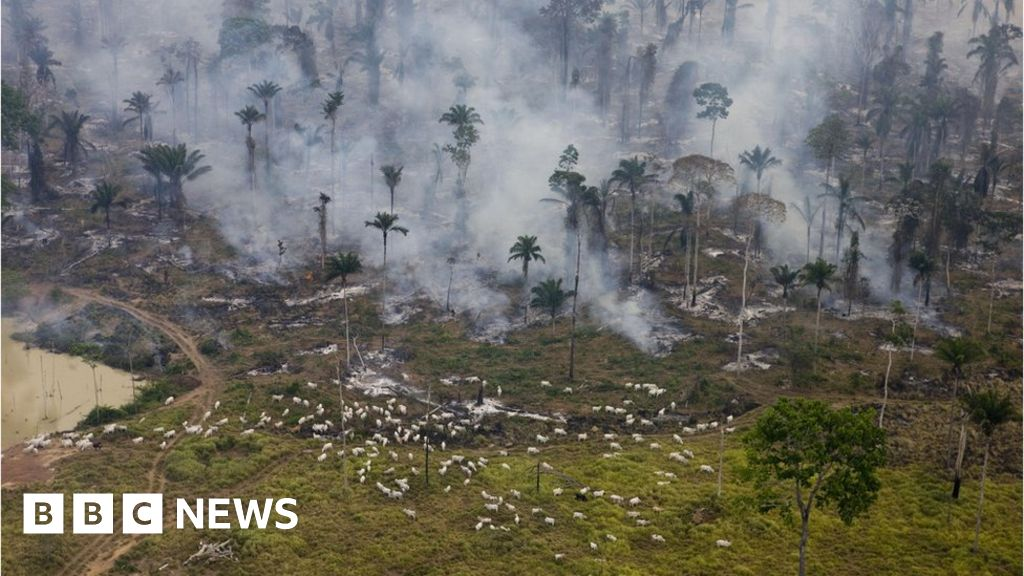 UK supermarkets warn Brazil over Amazon land bill