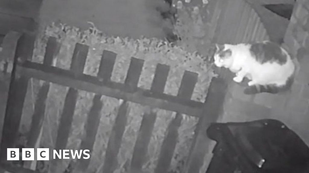 Man charged after cat mauled to death by dog in Walsall