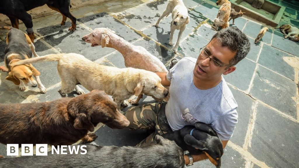 The man who looks after 735 dogs