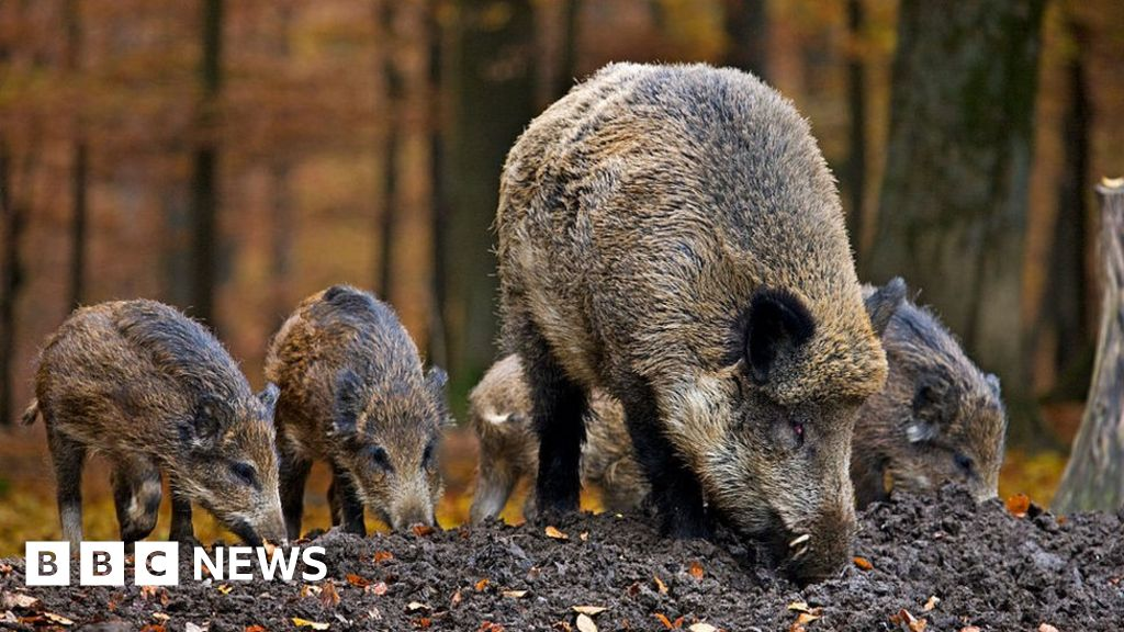 Wild boar family killed by police in Rome children's playground