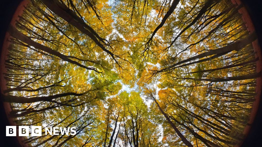 Climate change: Will planting millions of trees really save the planet?