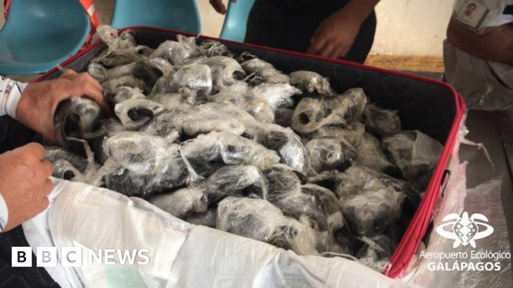 Galápagos turtles: 185 children captured by smugglers