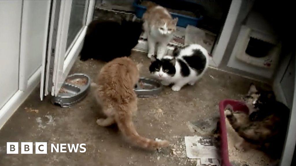 Capricorn Animal Rescue: Founder says Mold sanctuary has