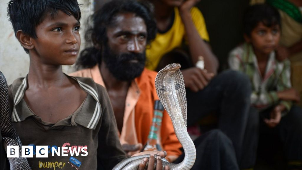 'More than one million' died of snake bites in India