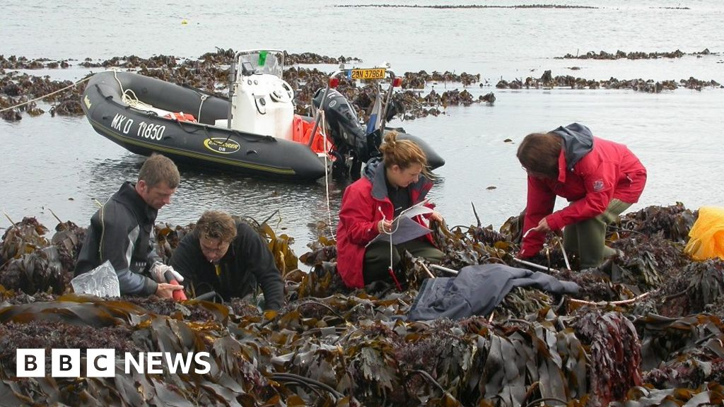 Kelp found off Scotland dates back 16,000 years to last ice age