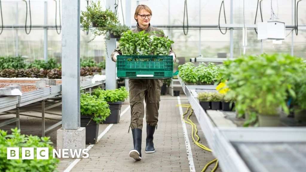 Millions of garden plants set to be binned