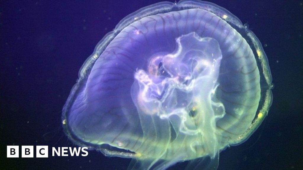 Jellyfish shut down Marchwood Power Station