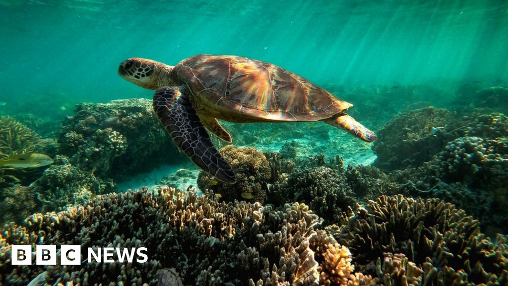 """The Great Reef Obstacle should be listed as """"endangered,"""" UNESCO says"""