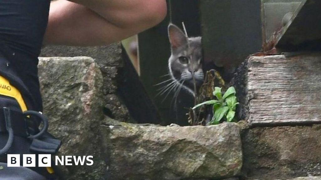 Bridge cat 'stuck' for six days walks home after failed