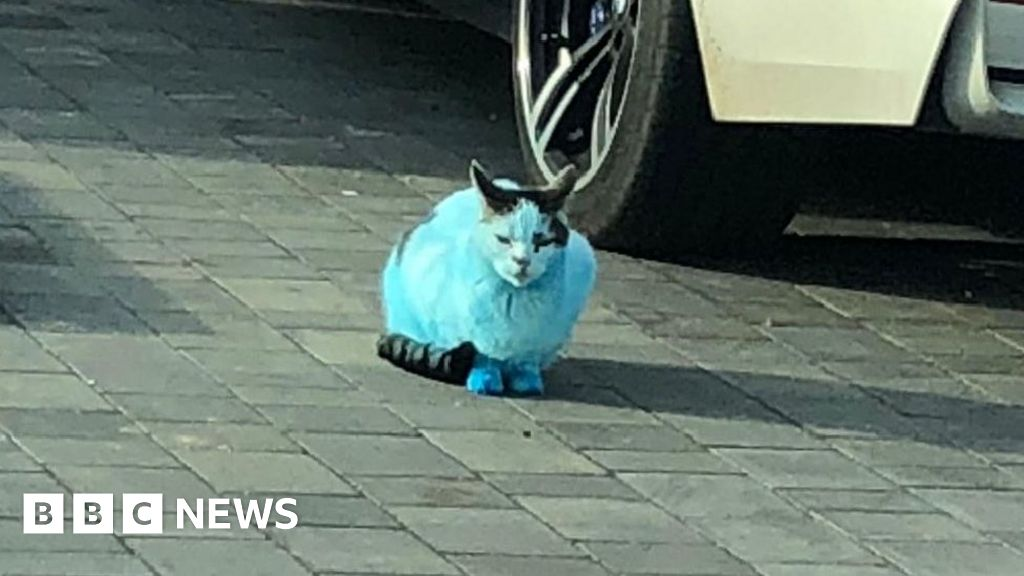 Blue Smurf Cats And Dogs After Clacton Ink Fire Bbc News