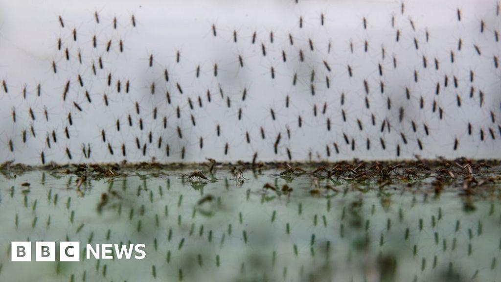 Malaria in Africa: Parasite 'resistant to artemisinin'