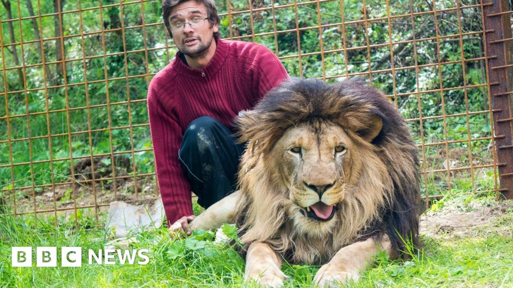 Czech Man Mauled To Death By Lion He Kept In Back Yard Bbc News