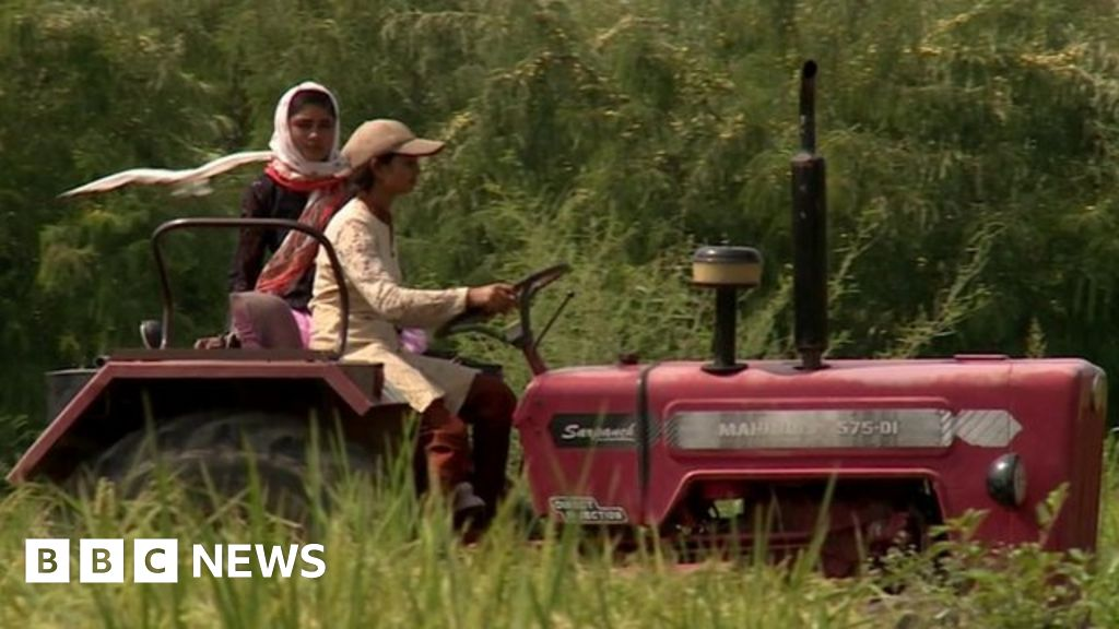 eff9e54d6b 100 Women 2015  The small band of pioneering women farmers in India - BBC  News