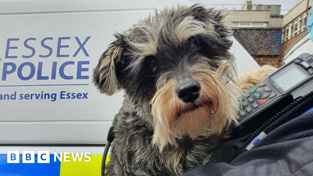 Suspected stolen dogs seized in raid in Hertfordshire