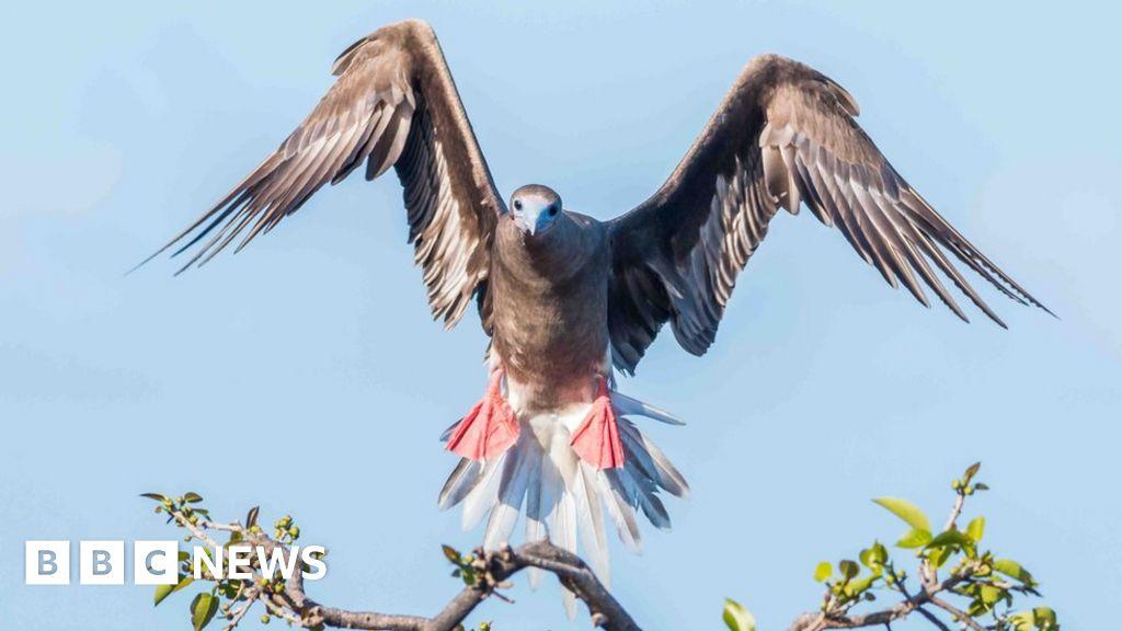 Redonda: The Caribbean island has become an ecological paradise