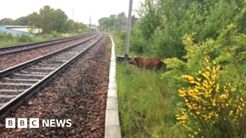 Wild boar on the loose at Wishaw causes train disruption thumbnail