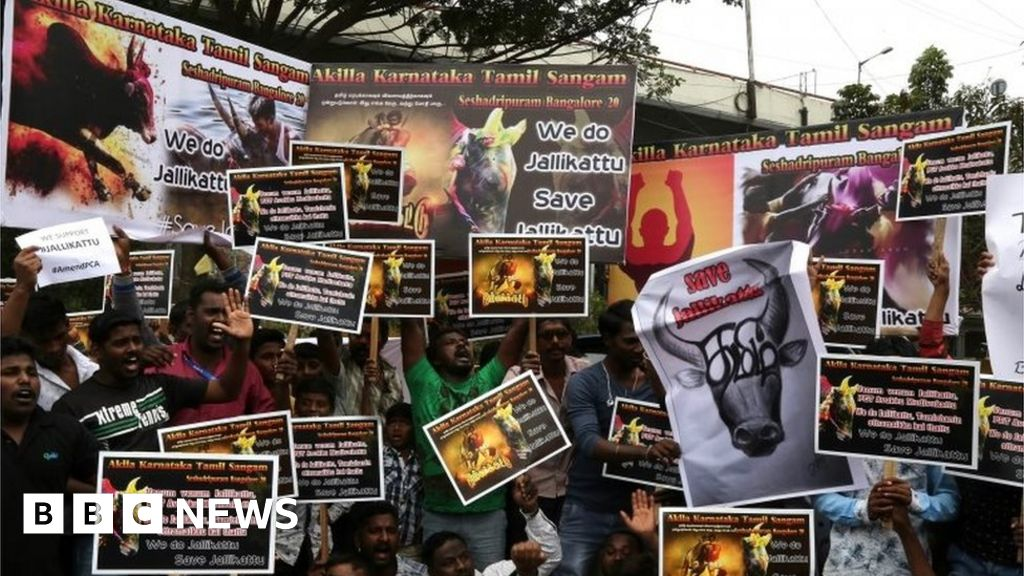 Caste splits Tamils over bullfighting - BBC News