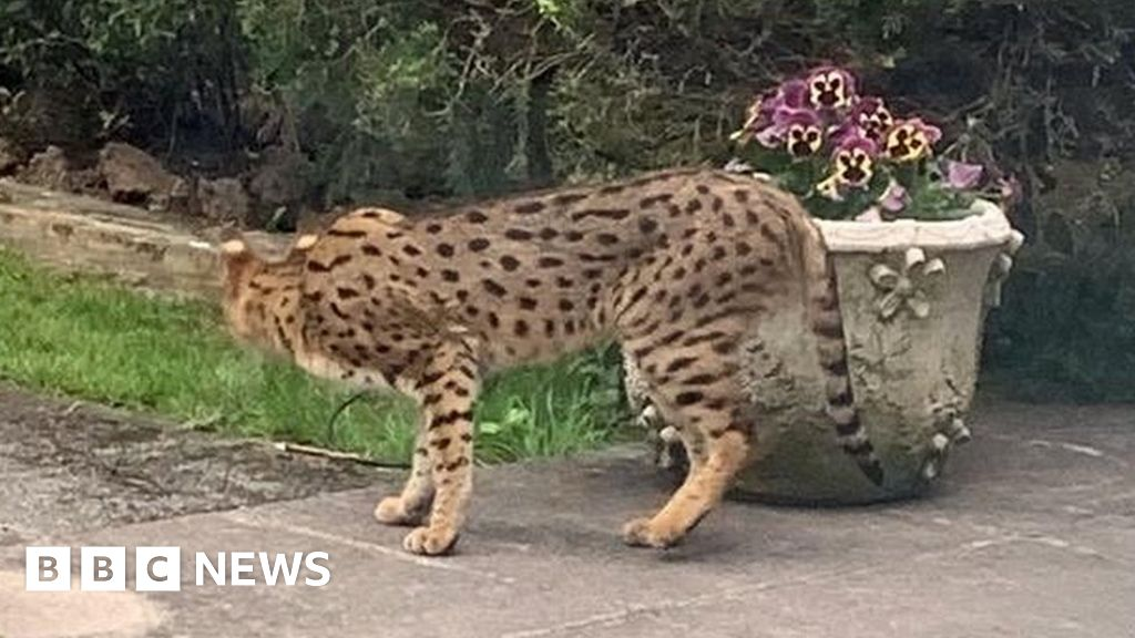 East Finchley big cat scare: Armed police called to garden - BBC News