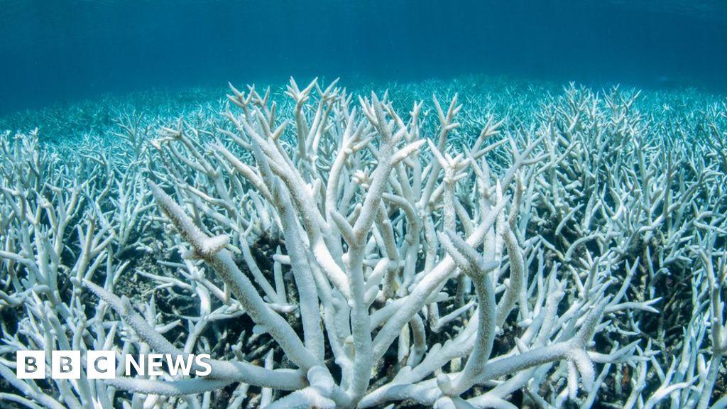 Climate change: Australia pledges to reach net zero emissions by 2050