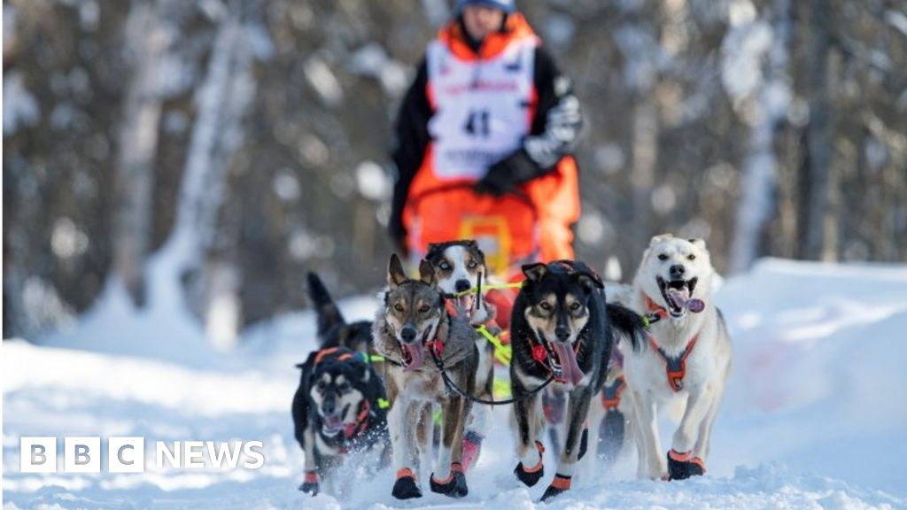 Iditarod: Competitor Gunnar Johnson tests positive for Covid in dog race