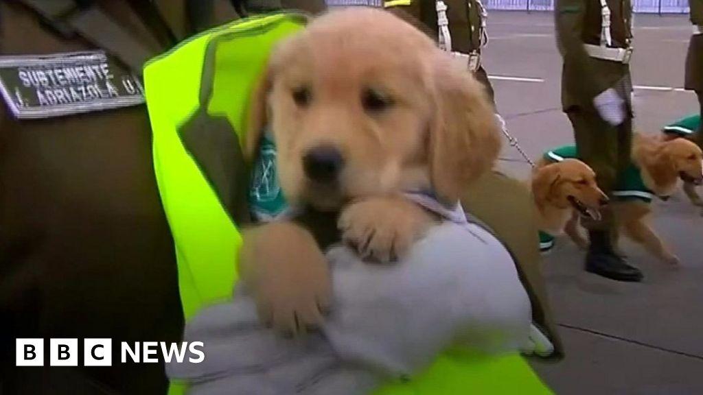 Puppies steal spotlight at parade