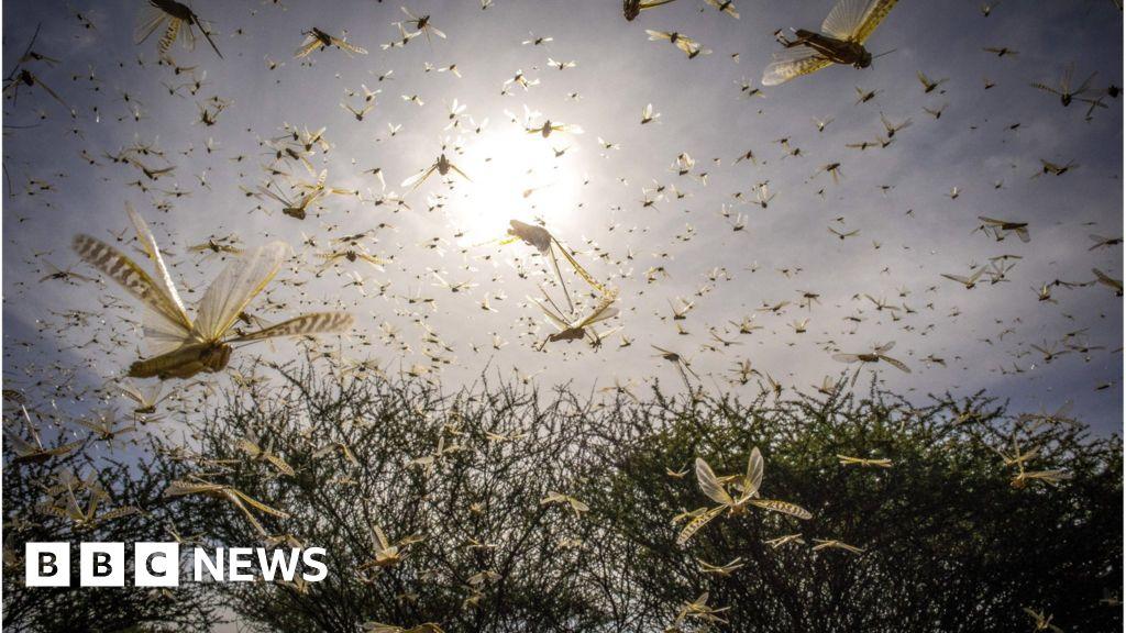 Locusts: UN calls for international help in East Africa