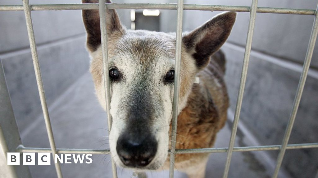 Californian law change means pet shops can sell only rescued animals