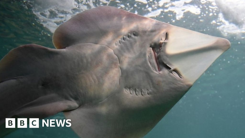 Sharks and rays to be given new international protections