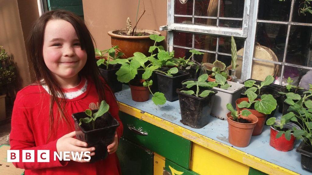 Coronavirus: Seed sales soar as more of us become budding gardeners