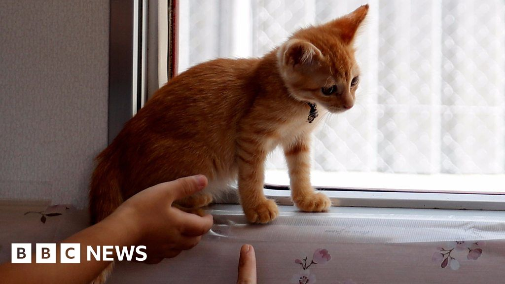 f491065524dd Cats invited on to local Japan train - BBC News