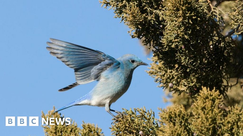 Mass deaths of migratory birds reported in US thumbnail