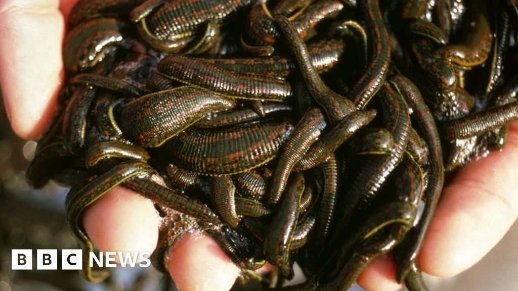 Leech Smuggling Canada Fines Man After 4 700 Carried On Plane Bbc News