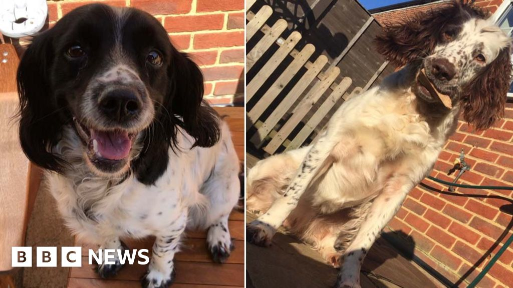 Bedfordshire dog thefts: Animals 'worth £50,000' stolen from kennels thumbnail