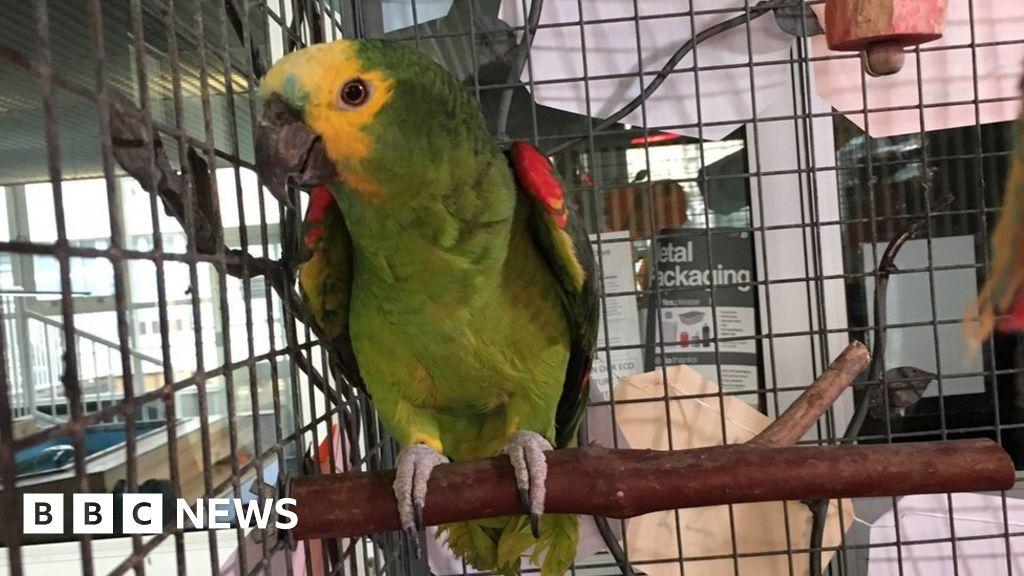 Jersey school parrot celebrates 70th birthday